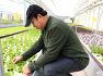 물고기가 채소를 키우는 아쿠아포닉스 농법을 활용하는 태안 서유채농장