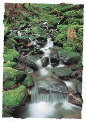 """『 나를 믿는 자는 성경이 말씀한 것과 같이, 그의 배에서 생수의 강들이 흐르리라.""""고 하시니 ─ He that believeth on me, as the scripture hath said, out of his belly shall flow rivers of living water. 』(요한복음 7:38)"""