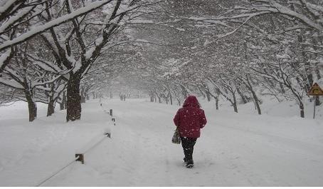 이 겨울 속에 봄이 있다