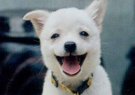 Image result for 동물 웃는 사진