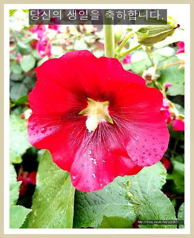 생일축하 꽃카드 190624