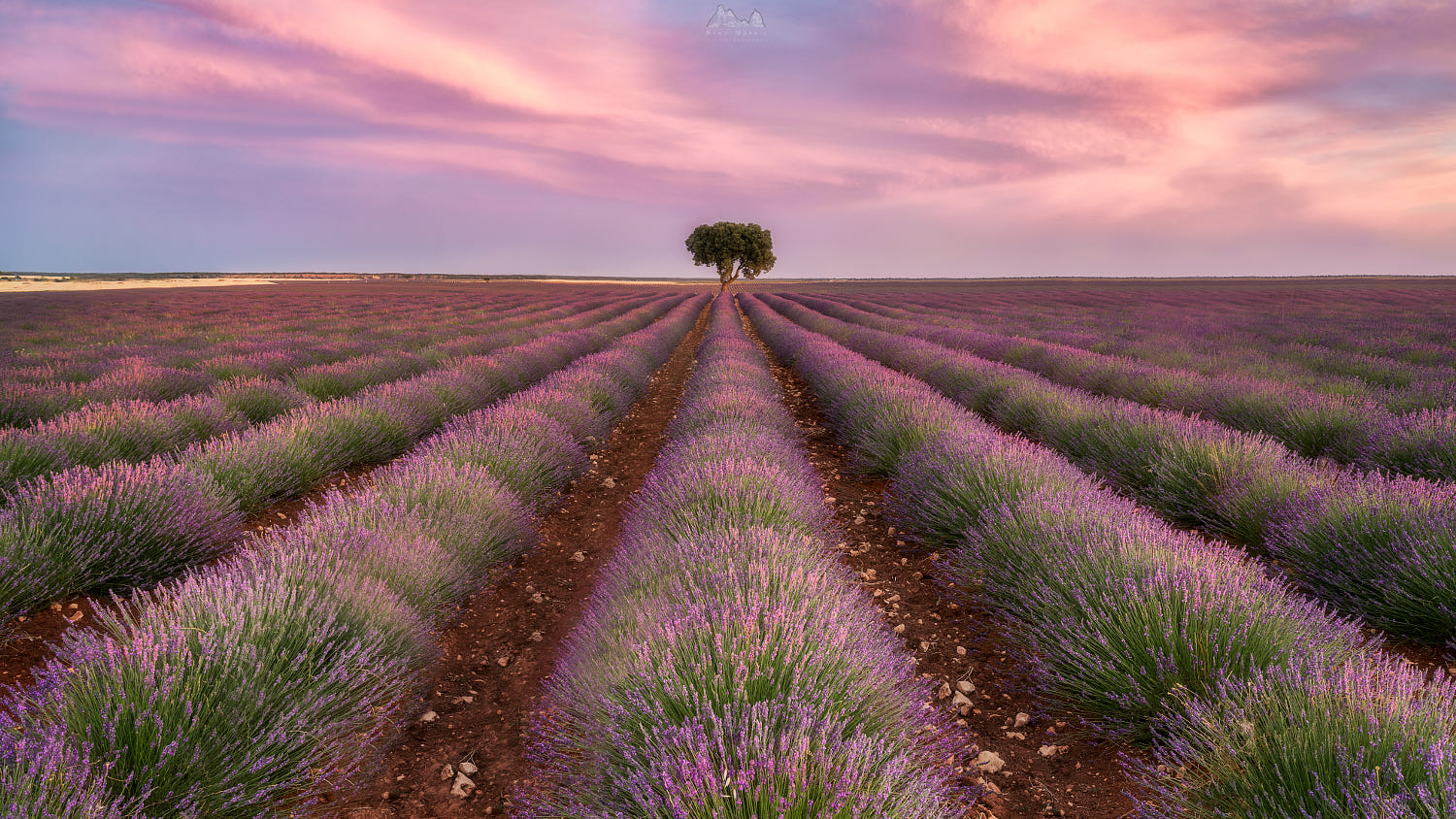 Lavender has a nice smell just by looking at it.